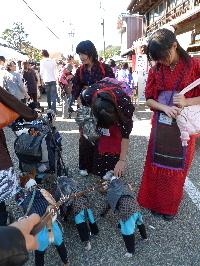 2010_1121花0103