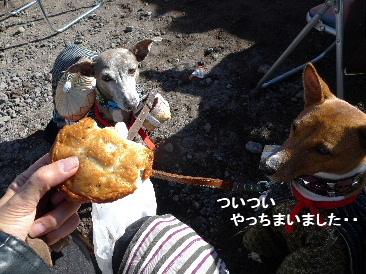 2010_1121花0117