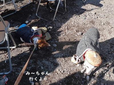 2010_1121花0209