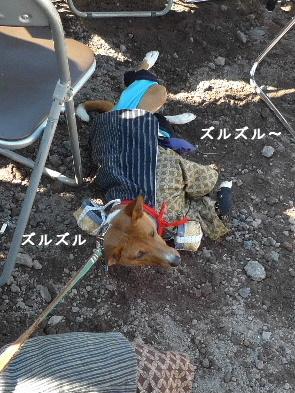 2010_1121花0210