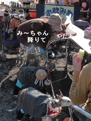 2010_1121花0116