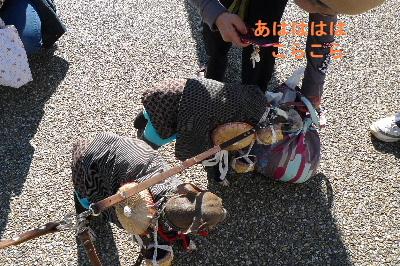 2010_1121花0042