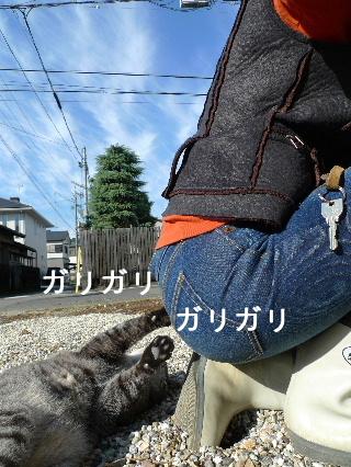 2010_1124花0067
