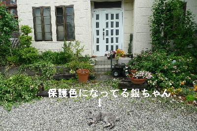 2010_0828花0046