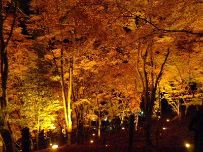 2010_1127花0105