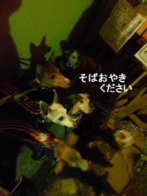 2010_1127花0141