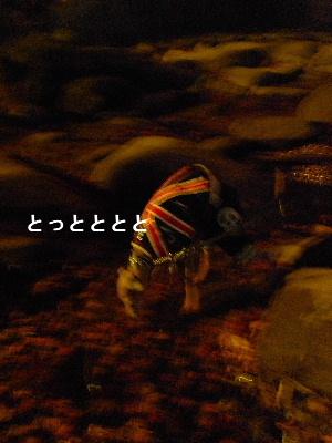 2010_1127花0137