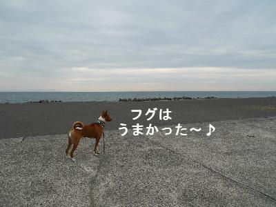 2010_1202花0053