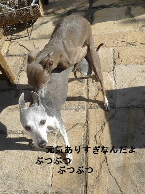 2010_1210花0016