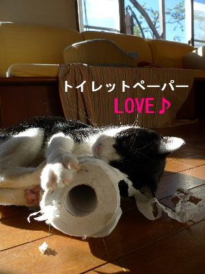 2010_1213花0011