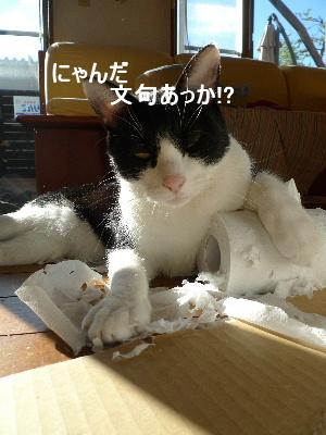 2010_1213花0022