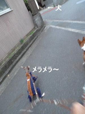 2010_1216花0065