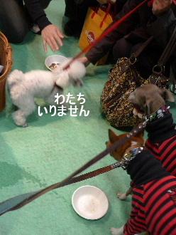 2010_1218花0032