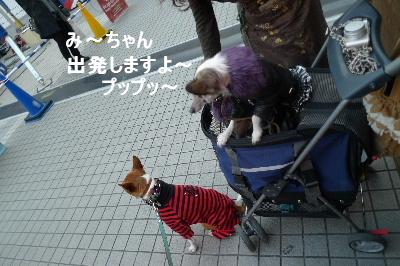 2010_1218花0126