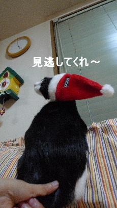 2010_1225花0066