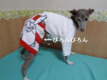 2010_1229花0006