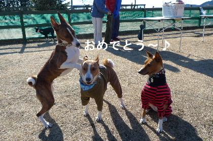 2011_0102花0114