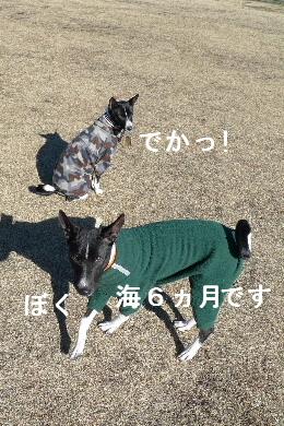 2011_0102花0126