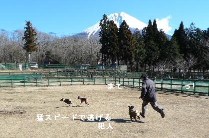 2011_0102花0152