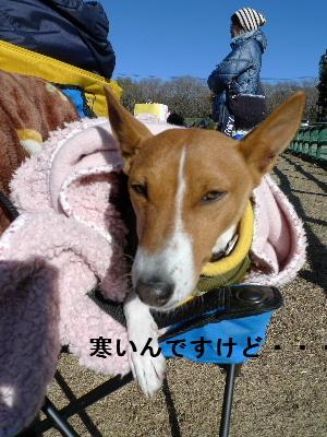 2011_0102花0271