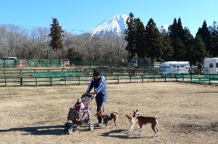 2011_0102花0130