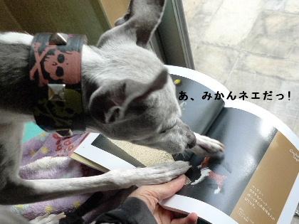 2011_0105花0012