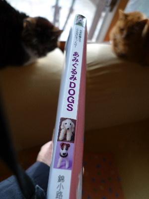2011_0105花0009