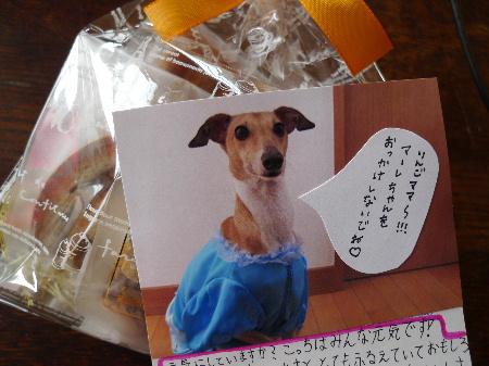 2011_0111花0002