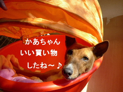 2011_0131花0018