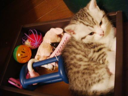 おもちゃ箱にゆず