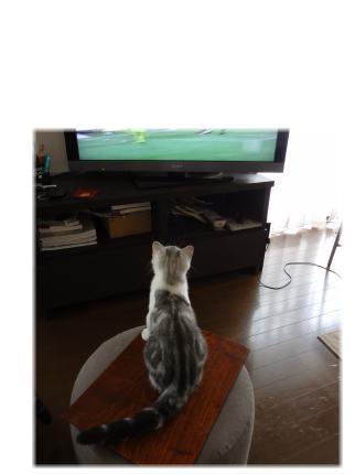 テレビを凝視