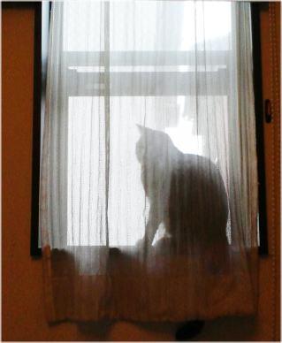 びーちゃん窓