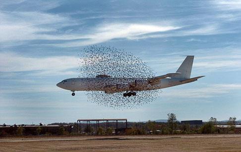 鳥に囲まれた飛行機