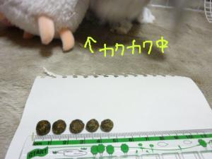 moko201006 020