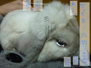 pic 20101043_04