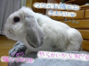 pic 20101046_07