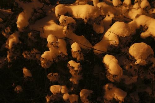 neige20 4