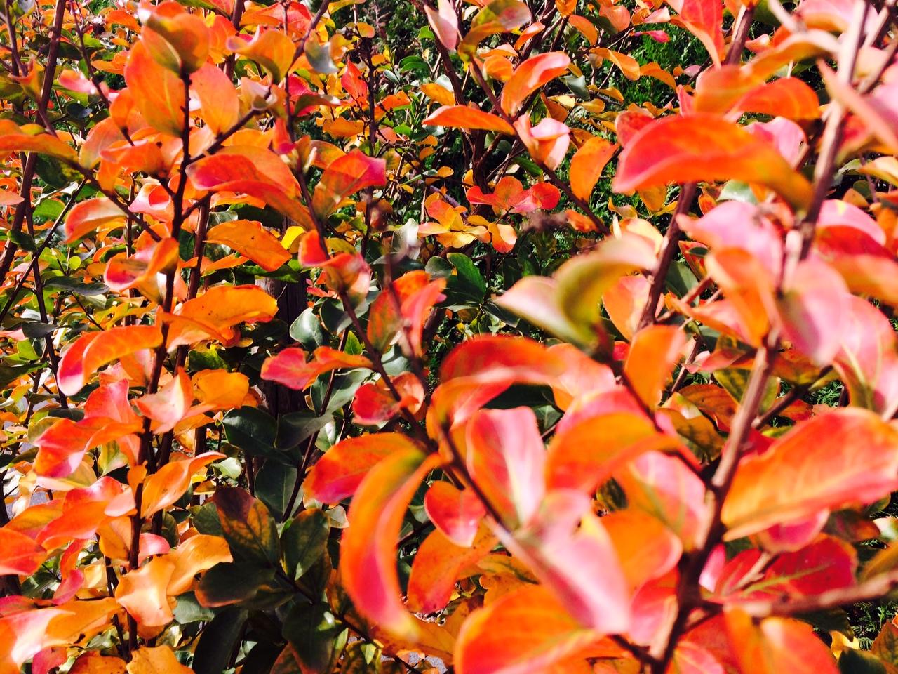 20141108_plante_1.jpg