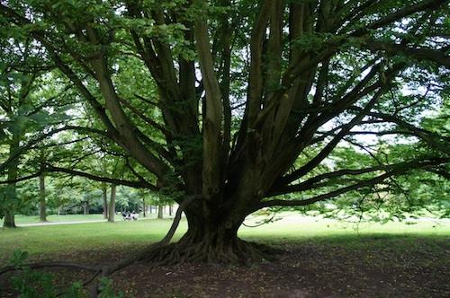 arbrelarge1.jpg