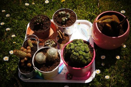 cactus16.jpg