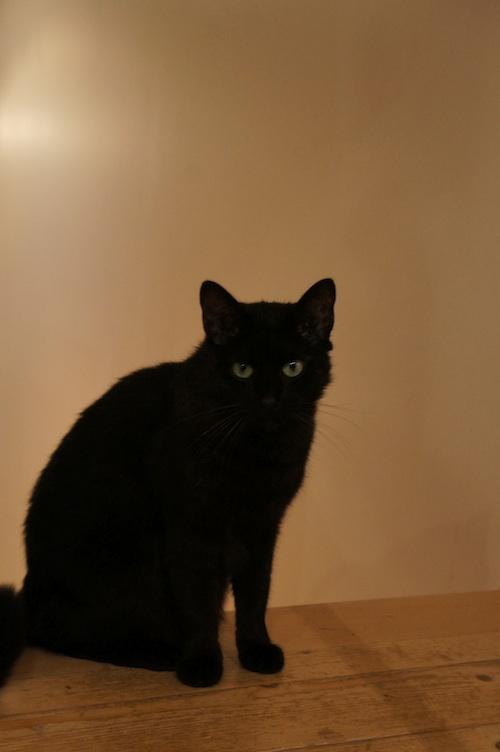 catcat2.jpg