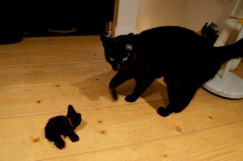 catcat3.jpg