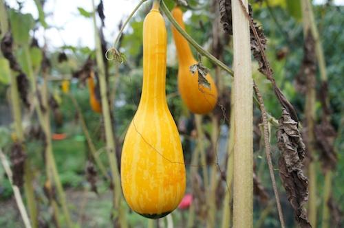 fruit05101.jpg
