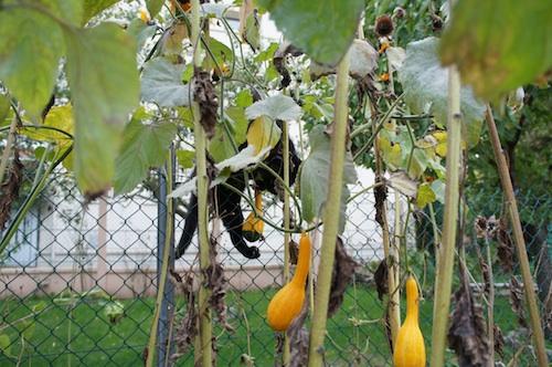 fruit05104.jpg