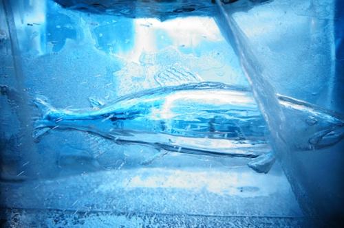 icefish2.jpg