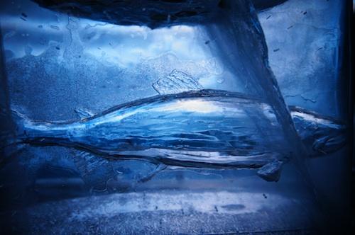 icefish4.jpg