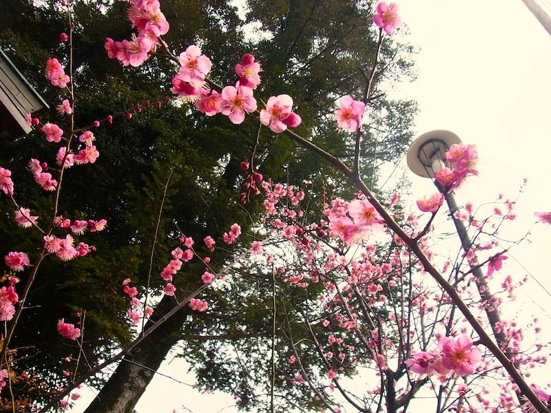yasaka3.jpg
