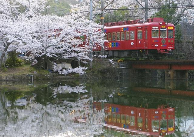 100404-wakayama-sakura-OMO-1.jpg