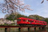 100404-wakayama-sakura-OMO-2.jpg
