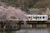 100404-wakayama-sakura-TAMA-1.jpg